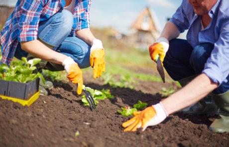 Le syndicat est entré en coopération avec le CIGL Mondercange qui assure la plantation du potager et l'entretien du jardin éducatif avec des personnes bénéficiant d'une mesure de réinsertion professionnelle.